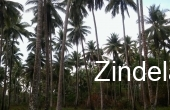 ZDP15127, Beach Front with Island White Sand Land For Sale